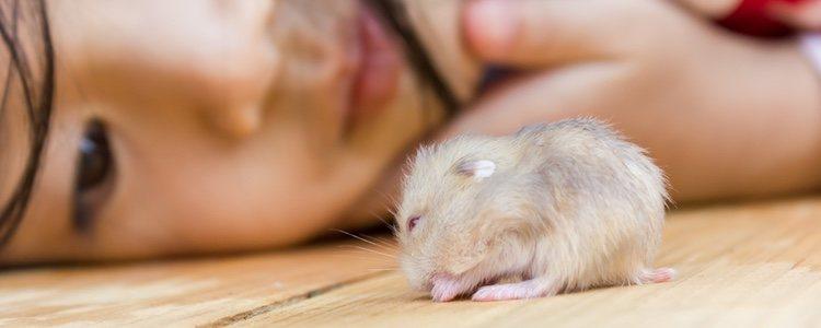 Los hamsters con la enfermedad de la cola mojada se verán decaídos