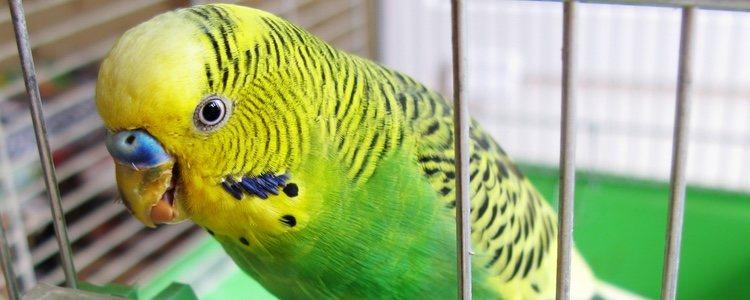 La dieta de los pájaros se basa mayoritariamente en semillas