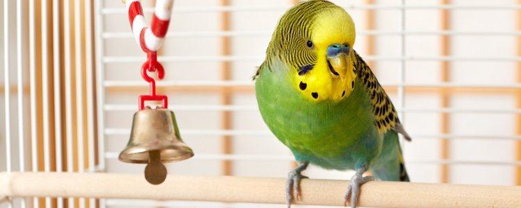 Complementa la alimentación de tu pájaro con fruta y verdura fresca