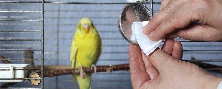 Es necesaria una limpieza correcta de la jaula para evitar enfermedades