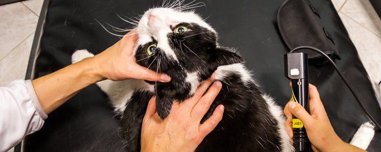 La artritis es una enfermedad que afecta al gato tanto nivel físico como social