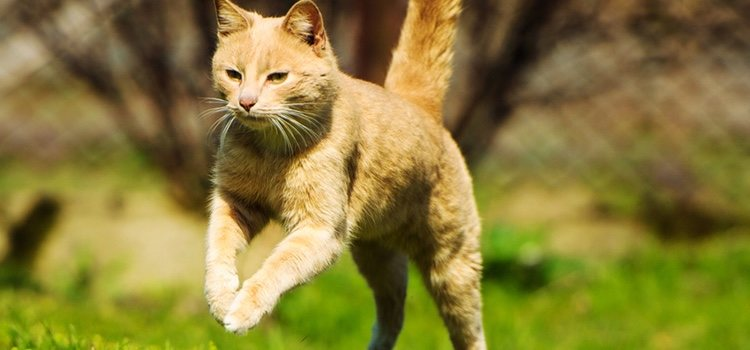 Es mejor que el gato con displasia no realice mucha actividad
