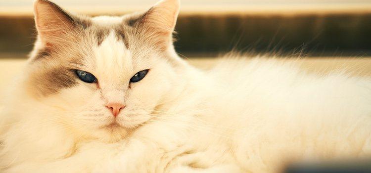 La operación quirúrgica ayudará a mejorrar las condiciones de vida del gato