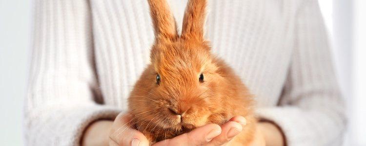 Hay muchos juegos con los que tu conejo disfrutará de lo lindo
