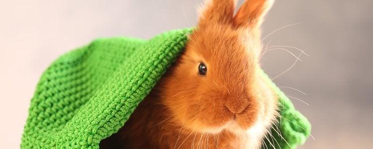 Los conejos pueden jugar a esconderse y entretenerse mucho