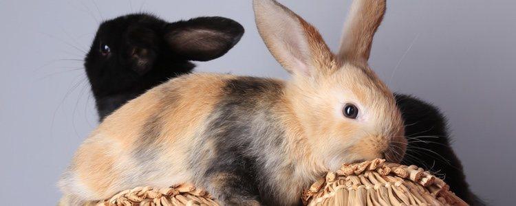 Los juguetes caseros son una apuesta segura para tu conejo