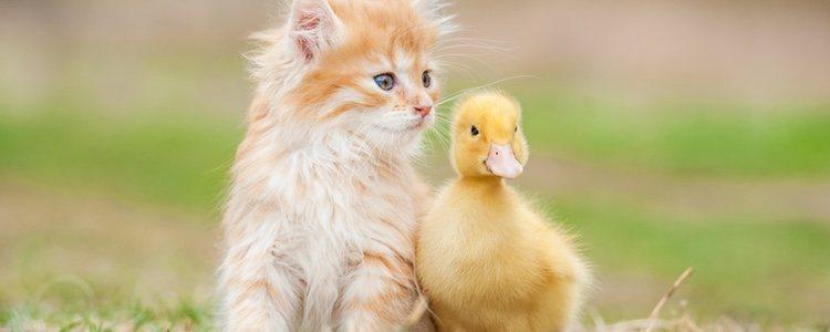 Los patos son unos animales muy sociables