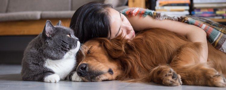Convivir con tu mascota te aporta grandes momentos