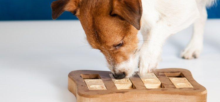 Antes de esconder un objeto a tu perro, déjale que lo huela