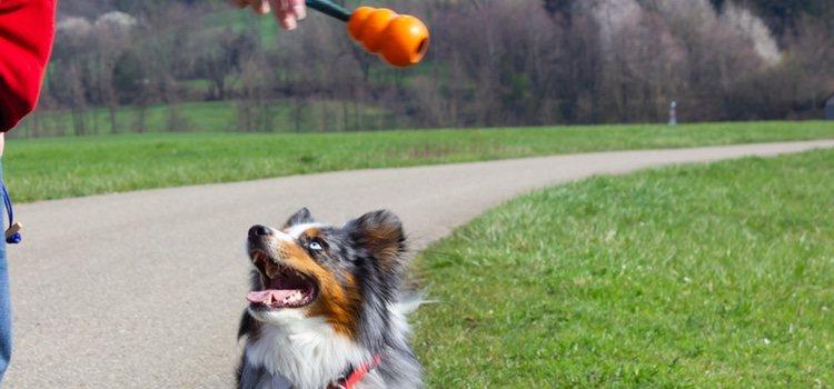 Cuando el perro encuentre el objeto, hay que premiarle