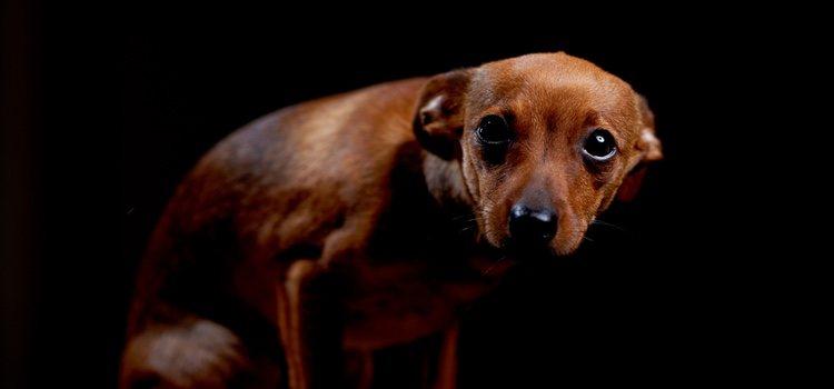 El miedo o la falta de socialización pueden hacer agresivo a un perro