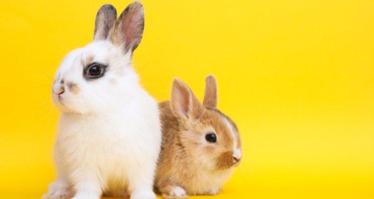 Los conejos tienen celo y hay que saber cómo afrontarlo