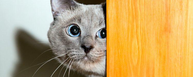 Las pupilas de los gatos se adaptan rápidamente a los cambios de luz