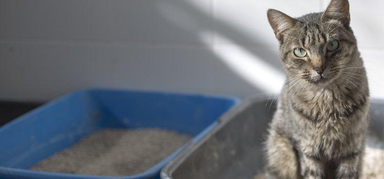 La pérdida de apetito y los vómitos son síntomas de la infección de orina en gatos