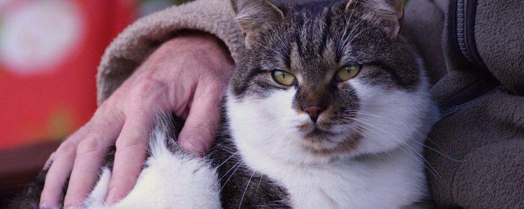 Cuando el gato supera los 15 años es cuando se pueden ver muestras de su demencia senil