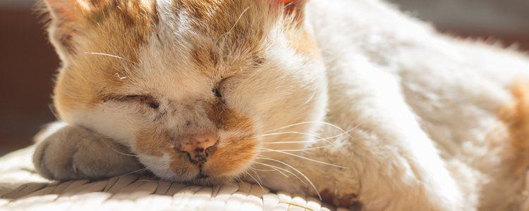 Cuando un gato tiene demencia senil se pasa todo el día durmiendo o gran parte de el