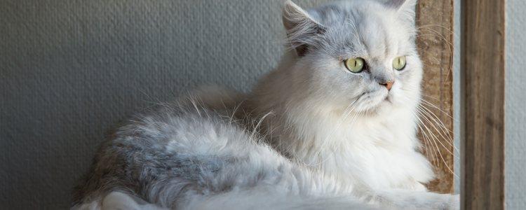 Se debe evitar muchos cambios en el hogar para que el gato no se desoriente más