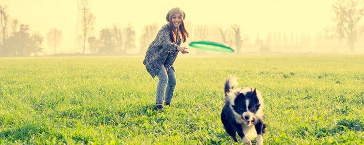 Es necesario estimular física y mentalmente a mascotas con satiriasis