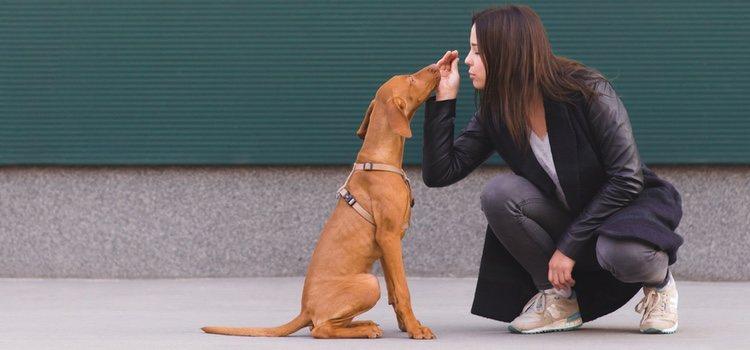 Es recomendable educar al perro desde que es cachorro para que sea más sociable
