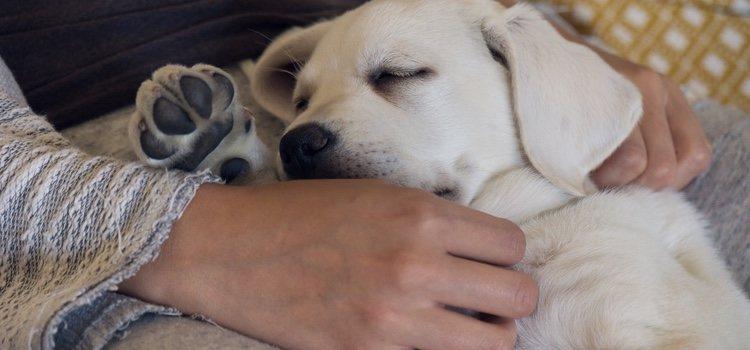 Los perros podrían soñar con sus amos e incluso recrear su olor personal