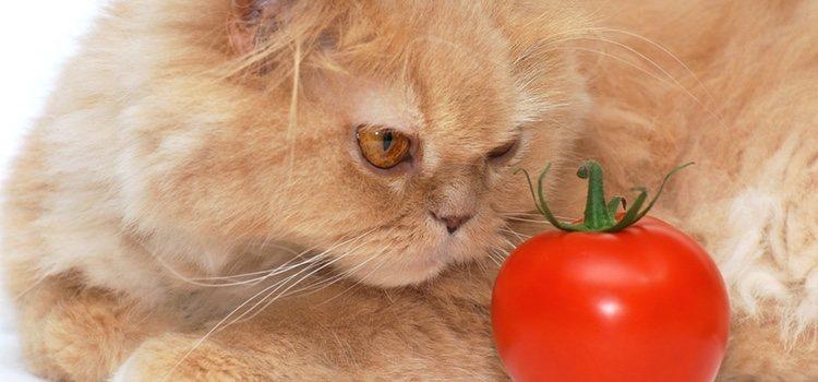 Deberás darle el tomate crudo y bien maduro a tu mascota