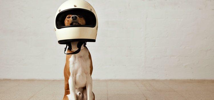También existen cascos especiales para perros