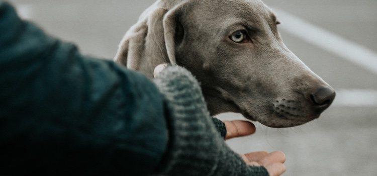 Es recomendable parar cada cierto tiempo para que el perro se estire