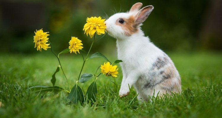 El apetito sexual de los conejos es desmesurado