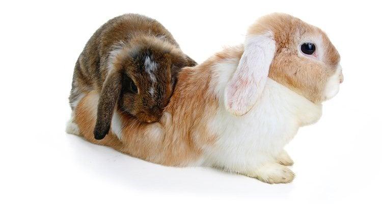 Es fundamental que este proceso se realice a la perfección y con conocimientos veterinarios