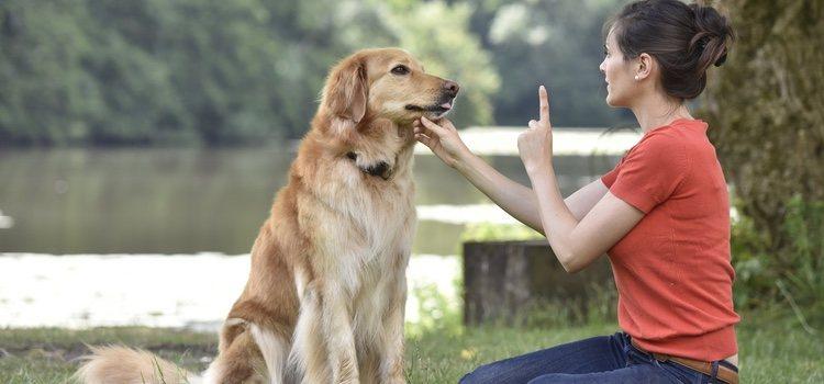 Puedes evitar este comportamiento reeducando a tu perro