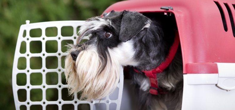 Un transportín para perros cuesta unos 30 euros