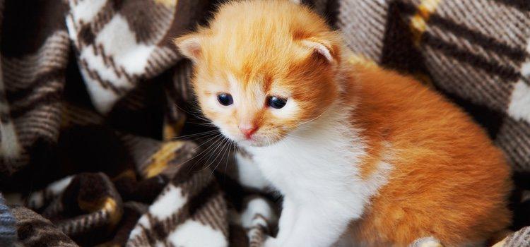 Los gatos caminan perfectamente al cumplir un mes de vida