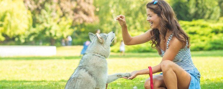 Es más fácil que el perro comience haciendo caso a un único adiestrador