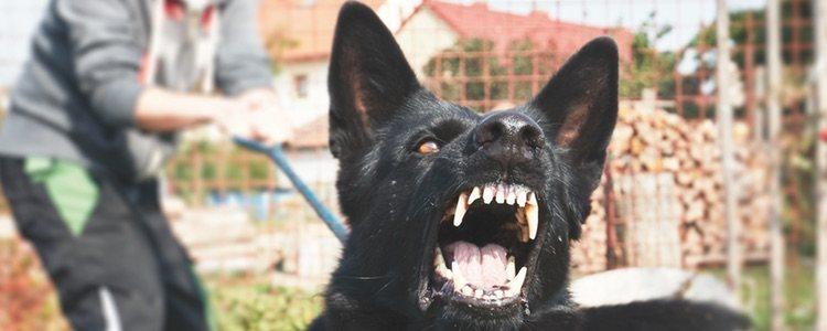 Controlar la agresividad forma parte de su adiestramiento