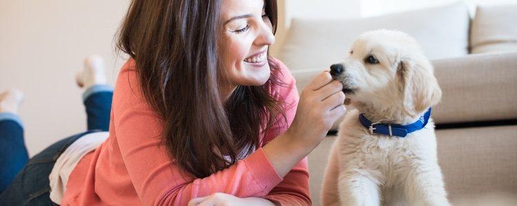 Tener un vínculo con tu mascota es de vital importancia para educarlo