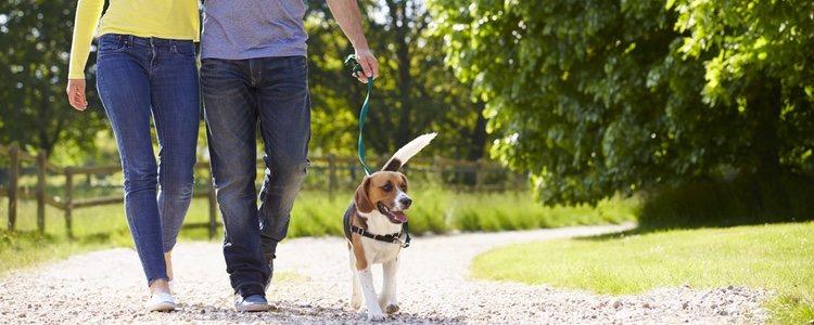 A algunos cachorros les cuesta adaptarse a llevar correa