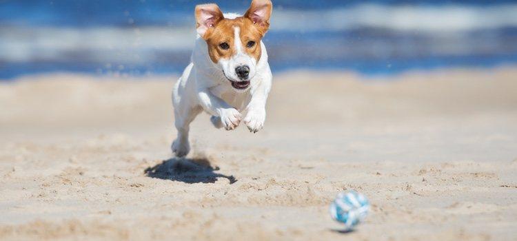 La Ley de Costas deriva a los ayuntamientos la decisión del acceso de los perros