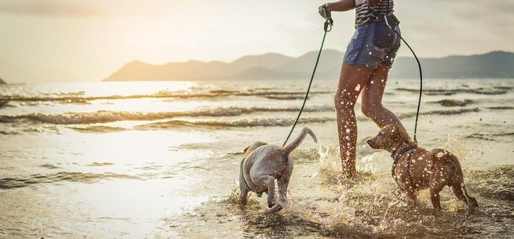 Vigila siempre a tu mascota para que no moleste al resto de bañantes