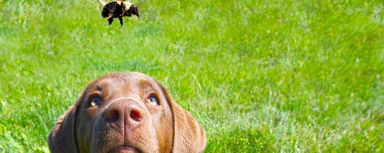 Hay que vigilar a tus perros a la hora del paseo en verano