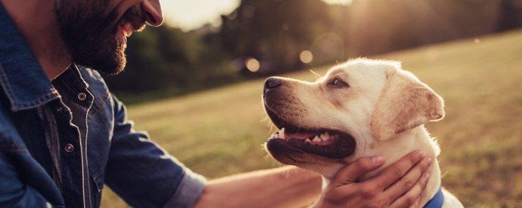 Entender el lenguaje corporal de tu perro es fundamental para cumplir con sus necesidades