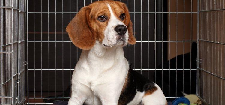 Una guardería canina ofrece una jaula individual con agua y comida