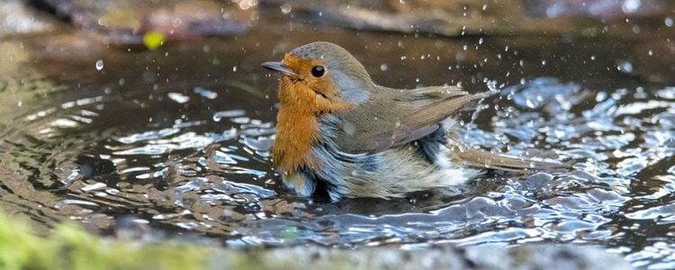 Los pájaros se acicalan y lavan a diario, son muy curiosas