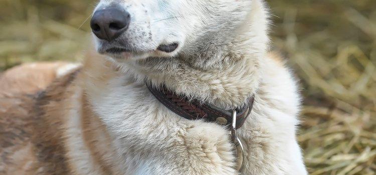 El Can de Palleiro nunca ha de ser blanco al completo