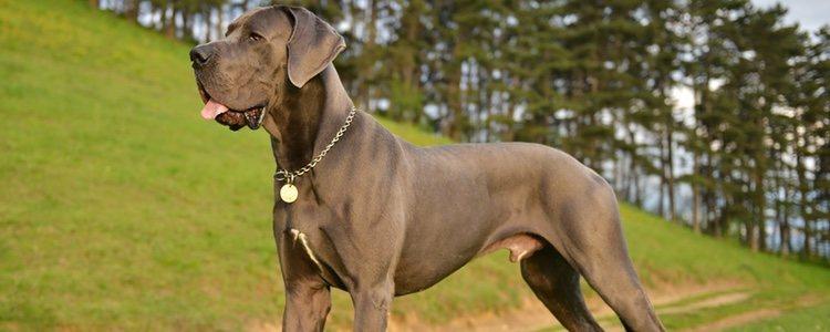 Esta raza de perro se caracteriza por tener mucha paciencia