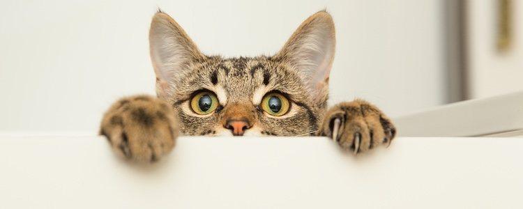 La mejor manera de prevenir que nuestro gato se intoxique con medicación humana es dejarla fuera de su alcance