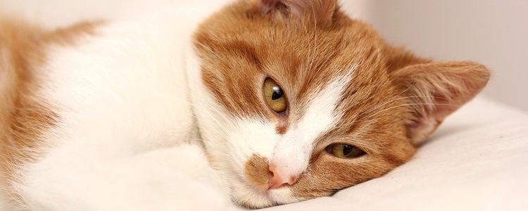 Hay muchos medicamentos que pueden provocar unas consecuencias catastróficas para tu gato