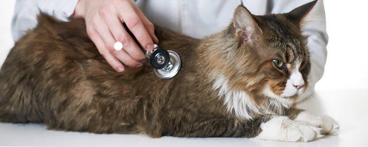 Lo mejor que puedes hacer por tu gato es llevarlo al veterinario