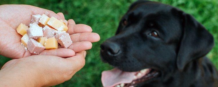 Las mascotas tienen sus propios medicamentos