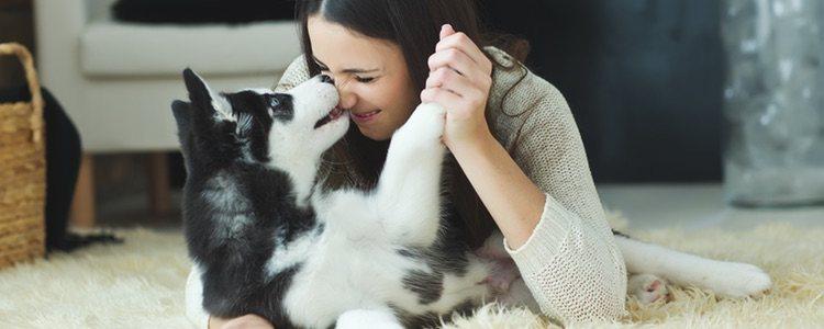 Tu perro agradecerá que no intentes darle medicamentos que son para humanos