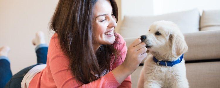 Cuida de tu mascota y llevándolo al veterinario cuando sea necesario para que no enferme